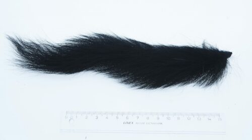 Dyed Black Foxsquirrel