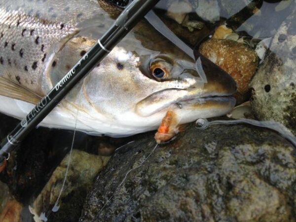 Danish sea trout fly