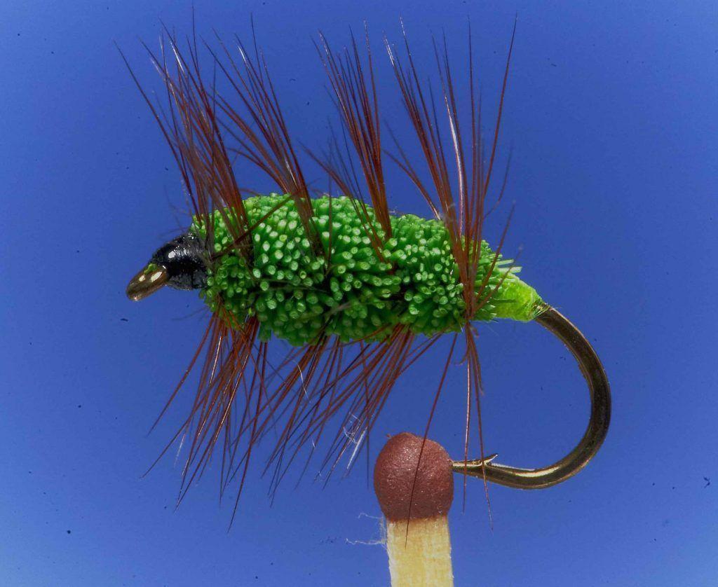 steelhead bug