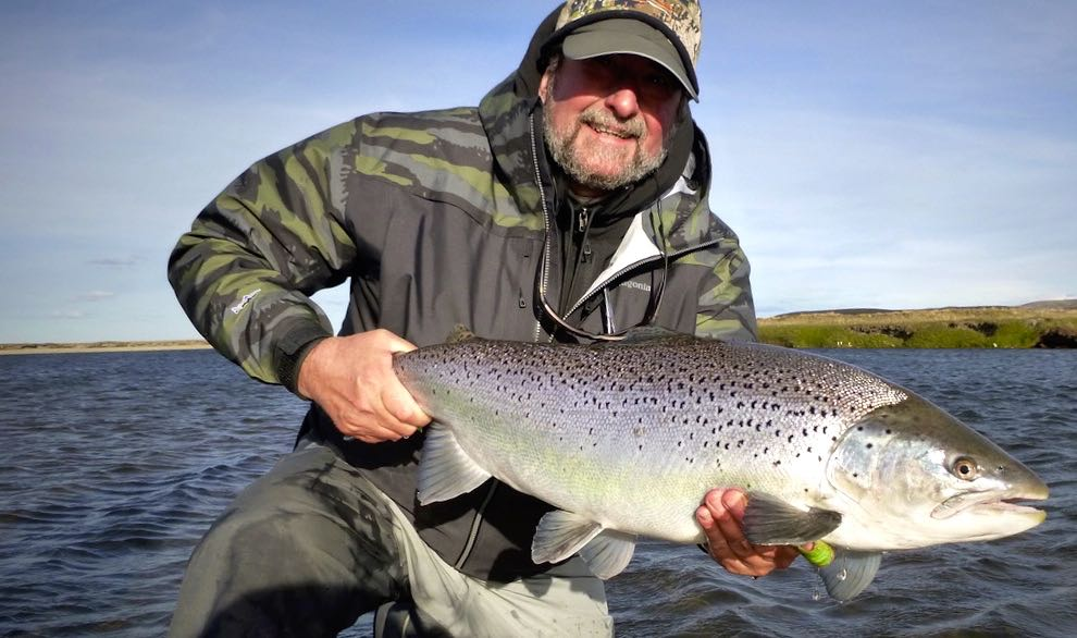 Sea trout on surface flies