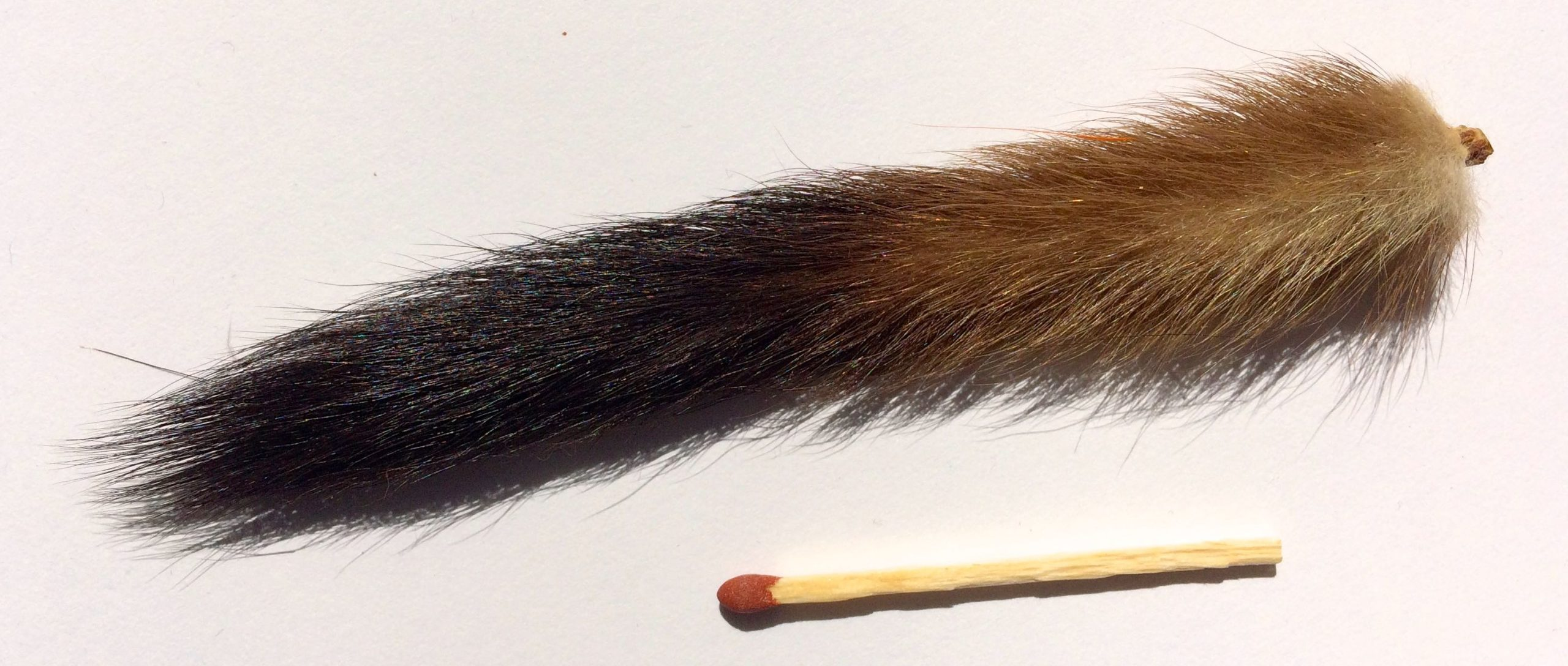 Stoat tail