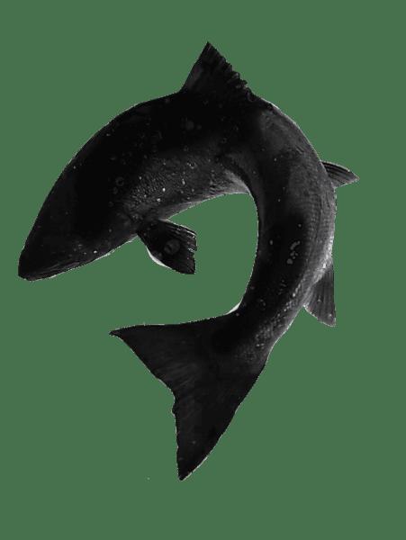 Fishmadman