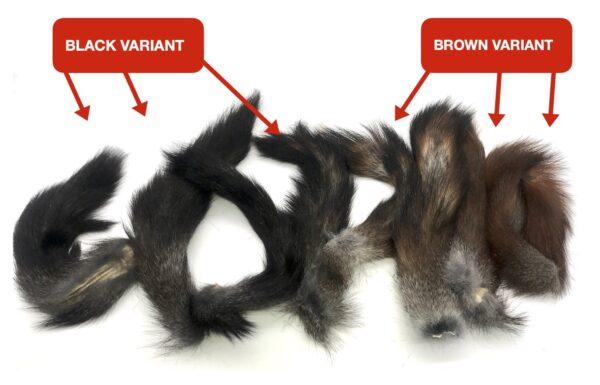 Natural black squirrel tail